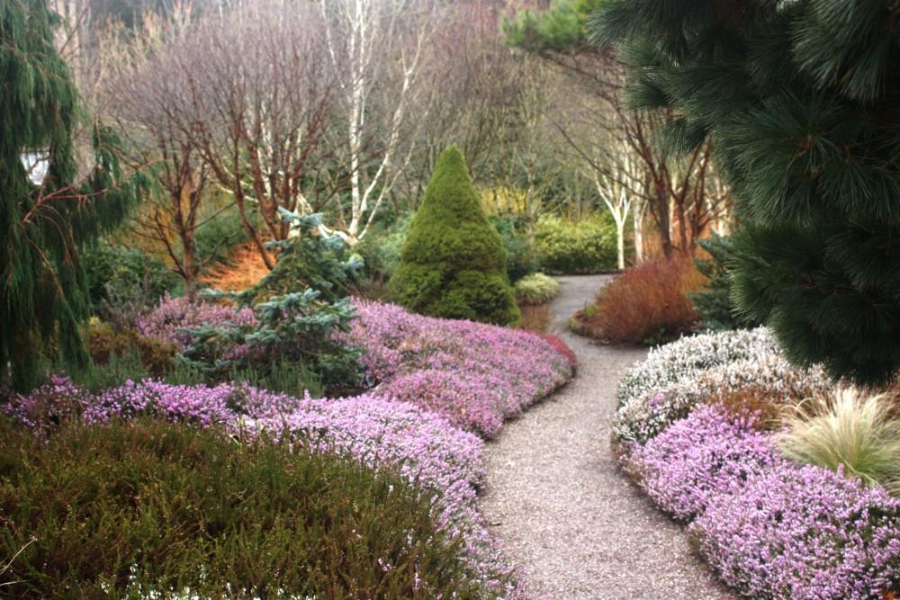 RHS Rosemoor, a garden in winter (2/6)