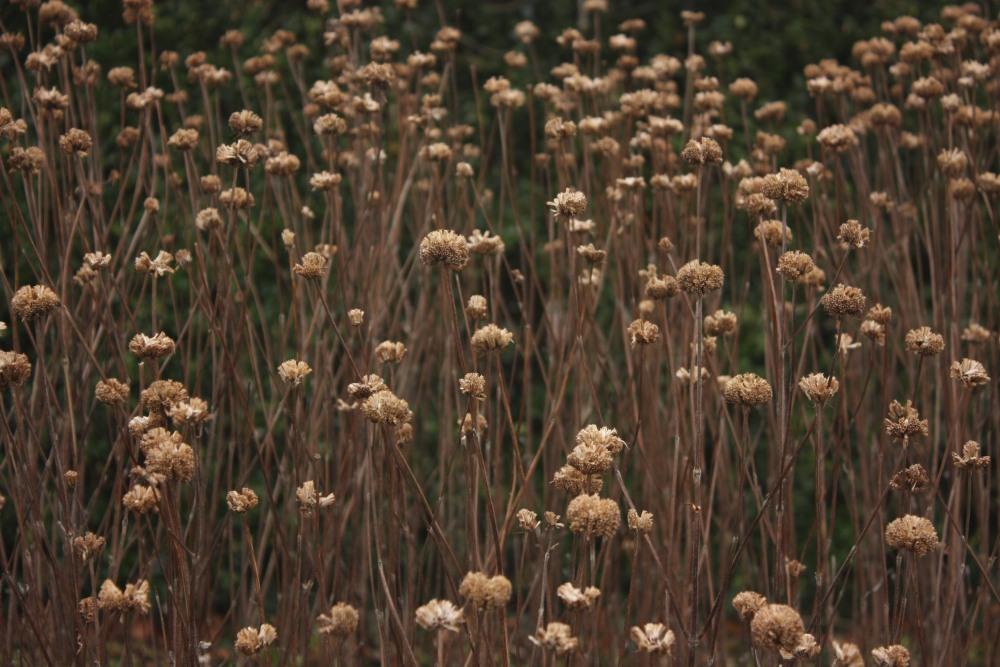 RHS Rosemoor, a garden in winter (1/6)