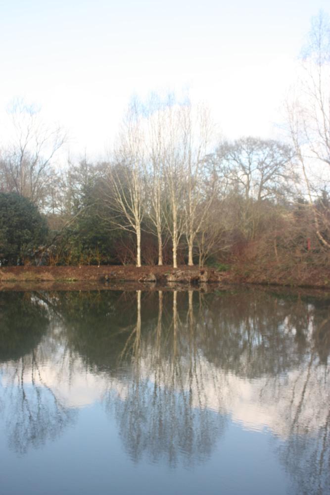RHS Rosemoor, a garden in winter (6/6)