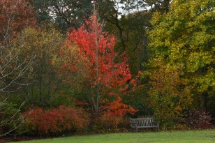 2012 Nov 11_1881