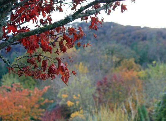 2012 Nov 11_1973_edited-2