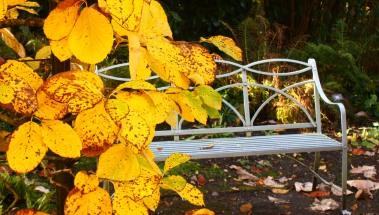 November Golden Glade