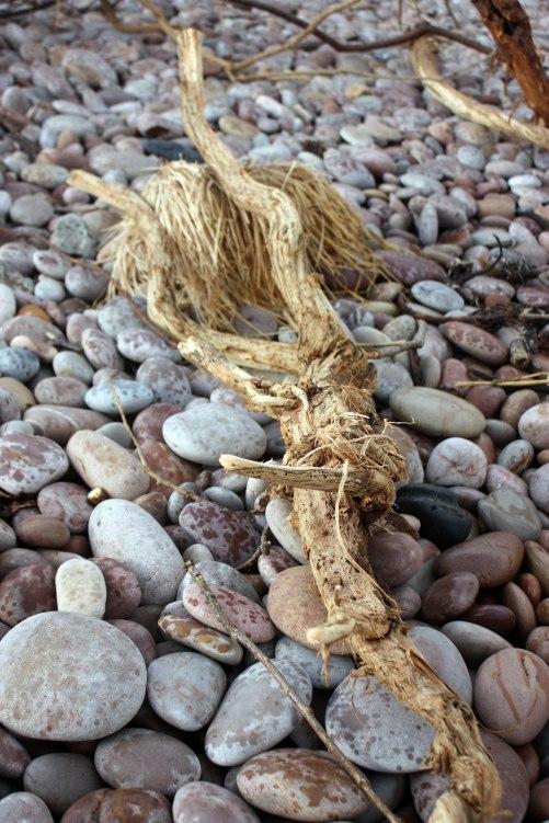 Fibrous driftwood