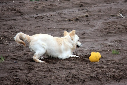 I love my ball so I think I'll just bury it safely thank you