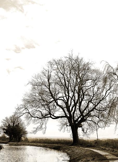 tivvy tree