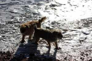 Two very happy dogs, Dido and Daisy
