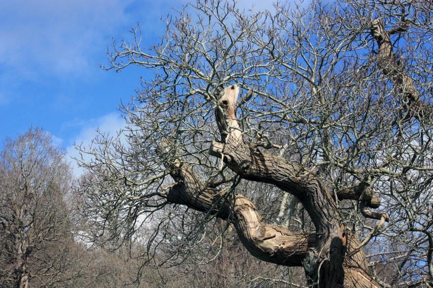 shapely tree