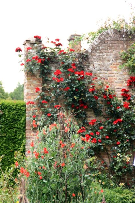 A rosy corner