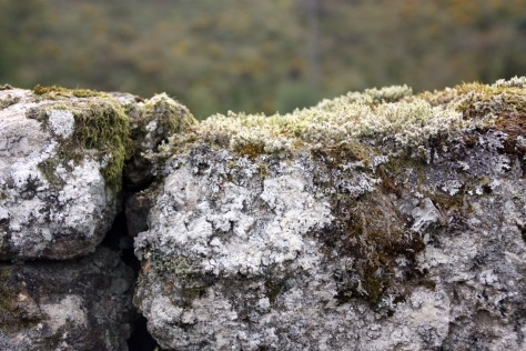 Up close and covered with lichen and moss