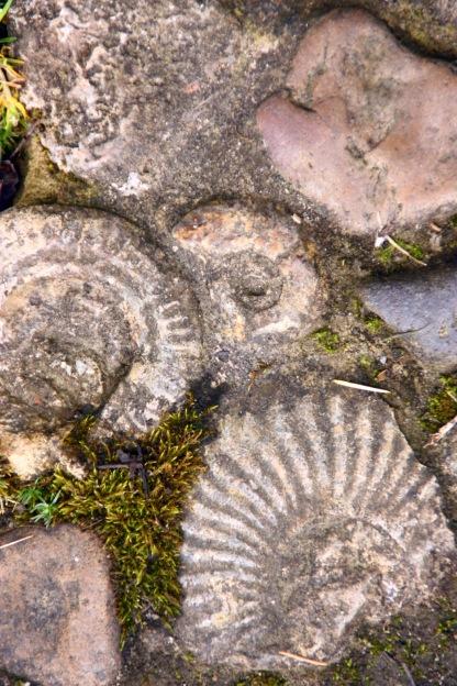 Stone ammonite