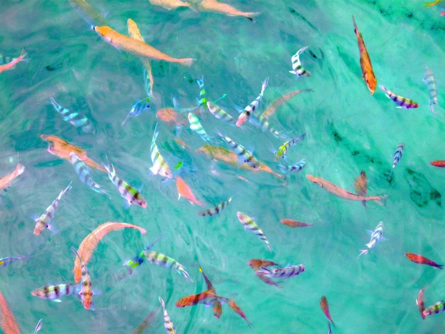 fishies_edited-1