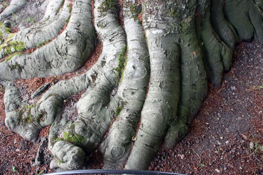 treetoes