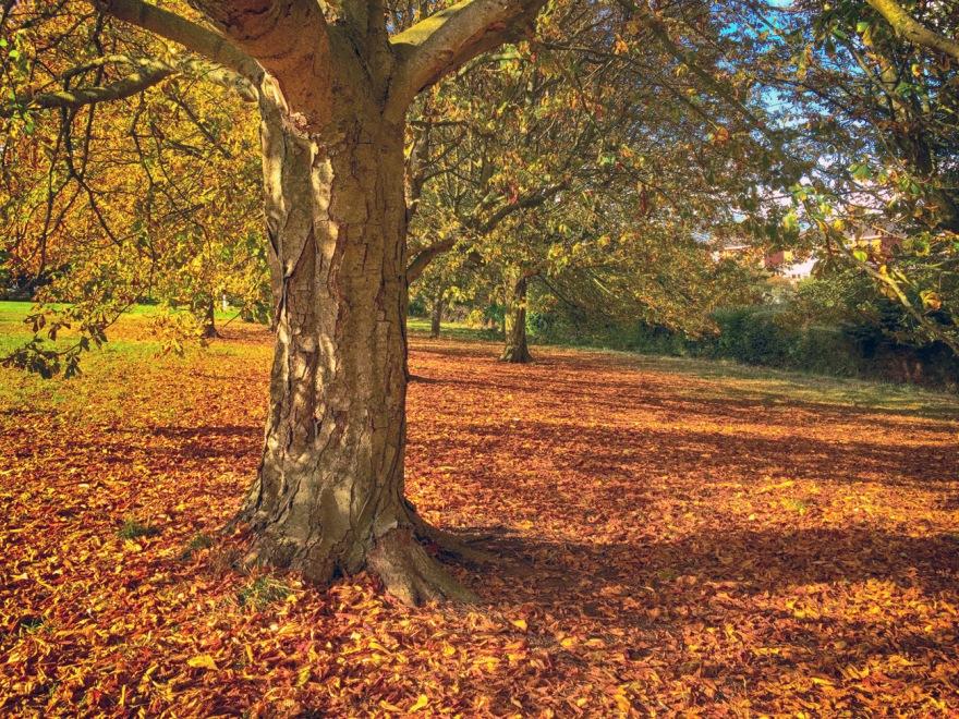 autumn-park-copy