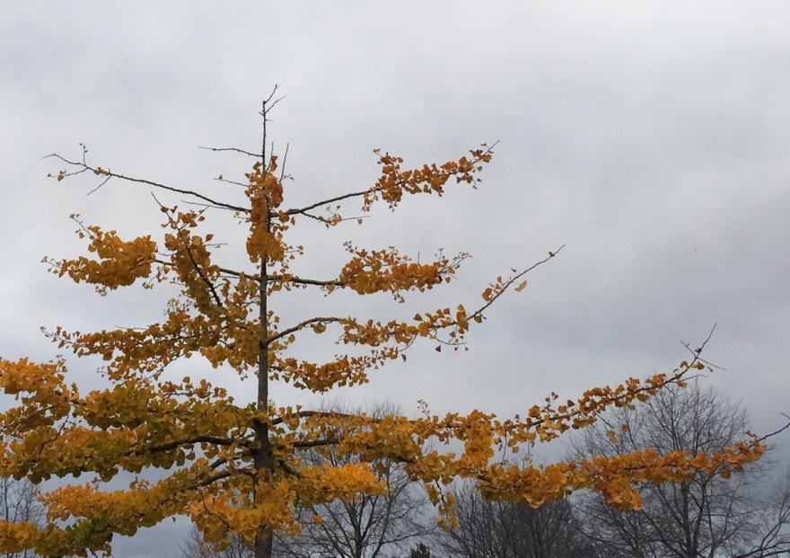 this-tree