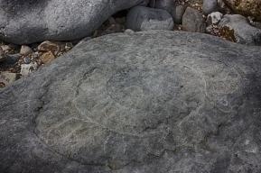 fossilb