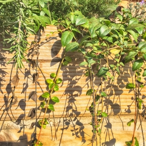 plants3-copy